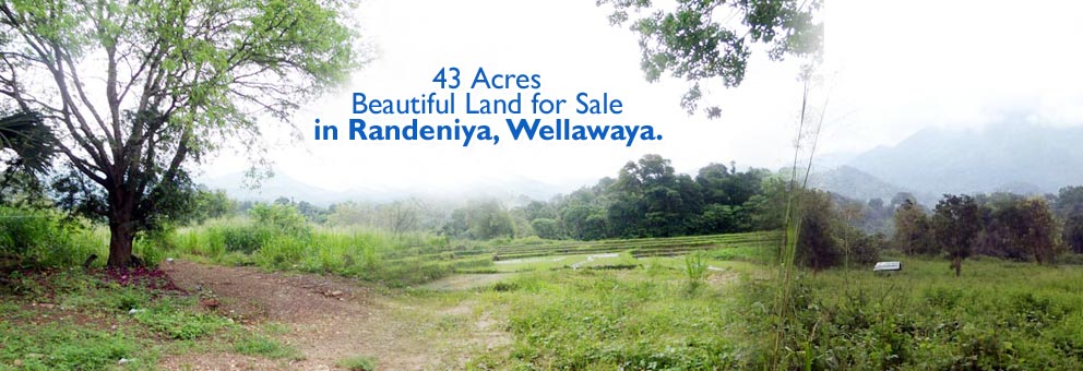 Beautiful Land for Sale in Randeniya, Wellawaya.