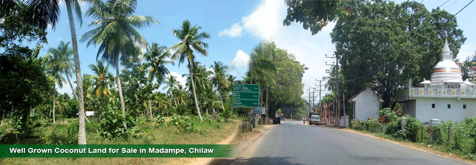 5 Acres Coconut Land for Sale in Pottuwilla, Madampe. Poultry Farm (Chicken Farm) available. House with basic facilitied. The land situated in Madampe Kuliyapitiya road and 3 Km to Madampe town and 20 Km Kuliyapitiya  town