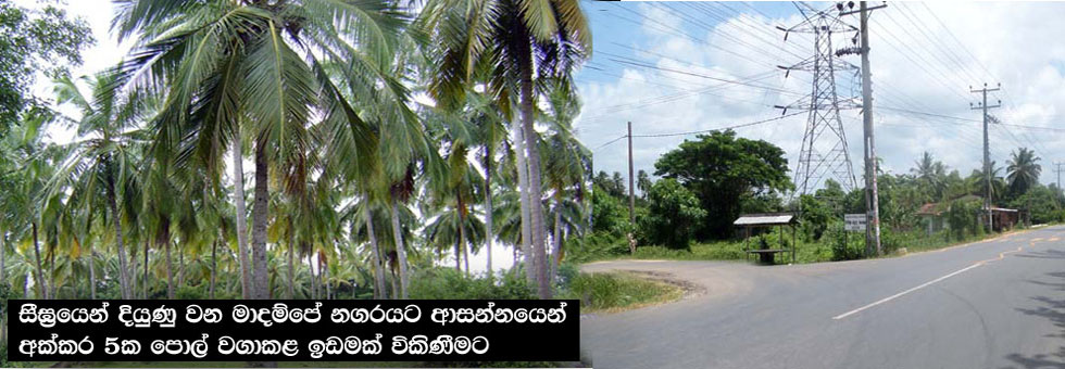 Well Grown Coconut Land for Sale in Madampe, Chilaw.