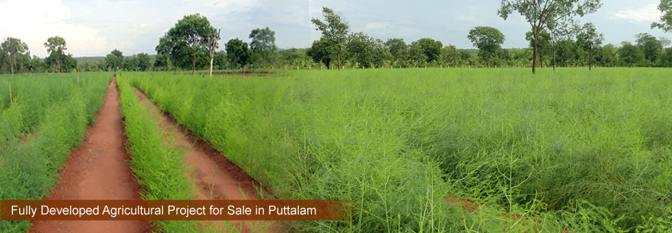 Fully Developed Agricultural Project for Sale at Wanathavillu, Puttalam, Farm comprises of 25 Acres Land, cleaning a processing center Bungalow, Staff quarters, Workers rest rooms, Store rooms, 6 Feet fence, two fully functional deep wells of 60 meters and 110 meters, drip irrigation system.