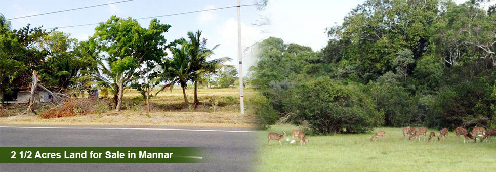 2 1/2 Acres Flat and Square Shape Commercial Land for Sale in Mannar. Situated between Mannar/ Madawachchiya main road, near Murunkan town, Railway Station, Malwathu oya and Madu road (Church Road).