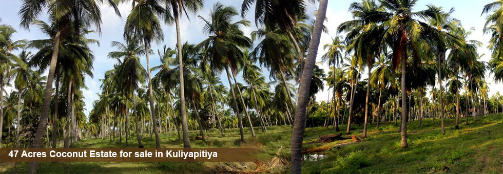 47 Acres Coconut Estate with Broiler Chicken Farm for sale between Kuliyapitiya and Bowatte. Agricultural Deep Well, 3 Phase Electricity, Storage Shed Watchman House and other necessary facilities.