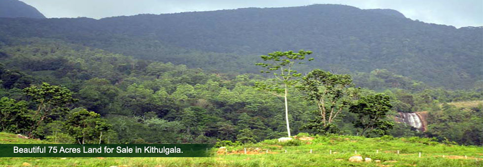 "Beautiful 75 Acres of Land for Sale in famous Kitulgala Tourist area with a Panoramic uninterrupted view of the mountain ranges and bordering to a ""Handun Ella Water fall. About 9 Km away from Colombo – Hatton road and close to Belilena Cave."