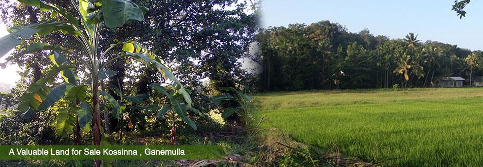 13.4 Perches of Land for Sale Kossinna, Ganemulla, calm silent environment close to Gampaha, Ganemulla and Kadawatha main cities. Just 2 Km to Kadawatha Ganemulla main road. About 4 Km to both Ganemulla and Gampaha main cities.